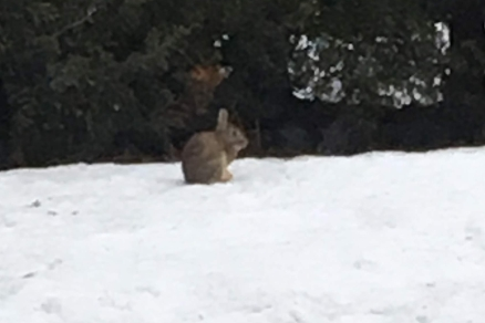 small bunny on the snow